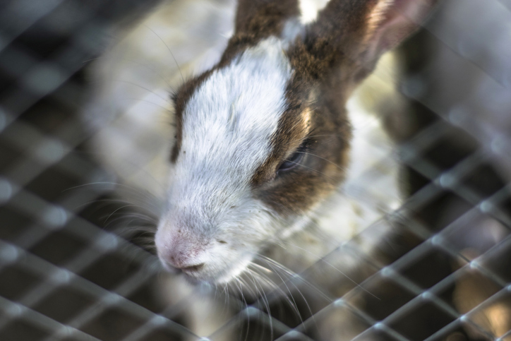 Beyond the Label: 6 Signs a Brand Still Uses Animal Testing